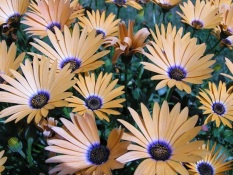 most-beautiful-flowers-40-photos-3